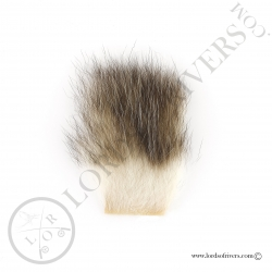 opossum-americain-poils-sur-peau-lords-o