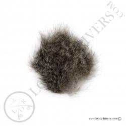 opossum-australien-poils-sur-peau-lords-