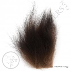 ours-brun-poils-sur-peau-poils-bruns-lor