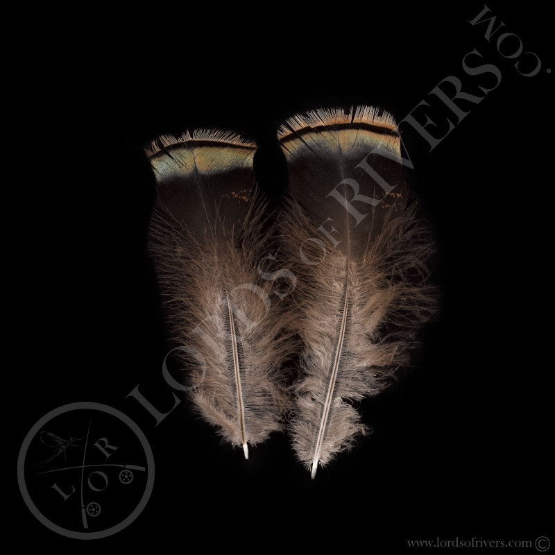 Paire de plumes vertes de dindon sauvage Lords of Rivers