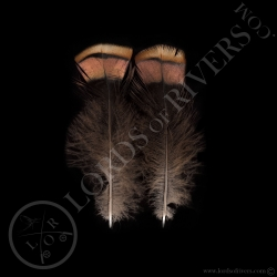 2-married-pink-wild-turkey-feathers-lord