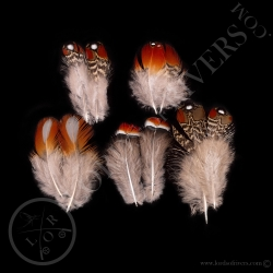 mixed-of-5-paired-body-feathers-tragopan