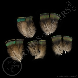 dindon-ocelle-quot-neck-feathers-quot
