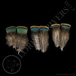 dindon-ocelle-quot-shoulder-feather-quot