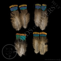 dindon-ocelle-quot-back-amp-rump-feather