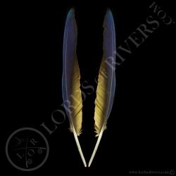 ara-bleu-paire-de-plumes-d-ailes-type-3-