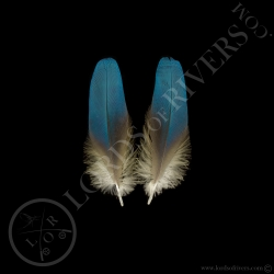 ara-bleu-plumes-de-corps-type-2-lords-of