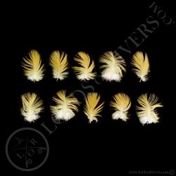 ara-bleu-plumes-de-corps-type-3-lords-of