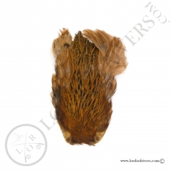 Indian Hen cape Veniard - Red Brown