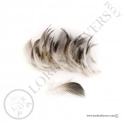 mallard-duck-flank-feathers-lords-of-riv