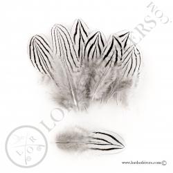 faisan-argente-plumes-de-corps-lords-of-