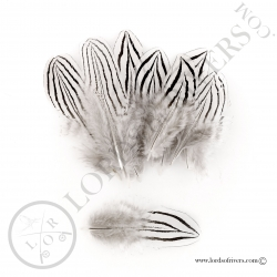 Silver pheasant body feathers Lords of Rivers