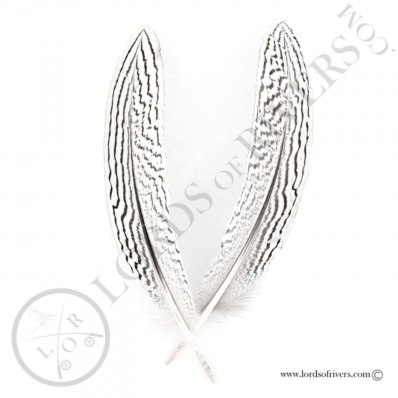Faisan Argenté plumes d'ailes Lords of Rivers - 2 plumes