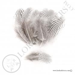 faisan-argente-petites-plumes-de-corps-l