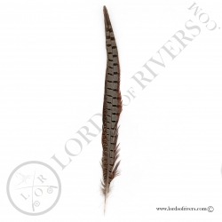 Natural Ringneck Pheasant - Side Tail Lords of Rivers