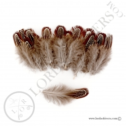 Ringneck Pheasant Church Window feathers Lords of Rivers