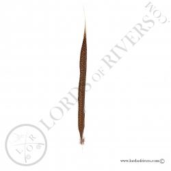 faisan-dore-plume-de-queue-centrale-enti
