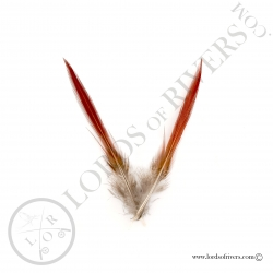 golden-pheasant-sword-spikes-lords-of-ri