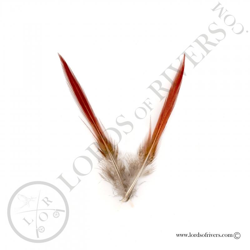 Faisan Doré plumes de queue Epée Lords of Rivers