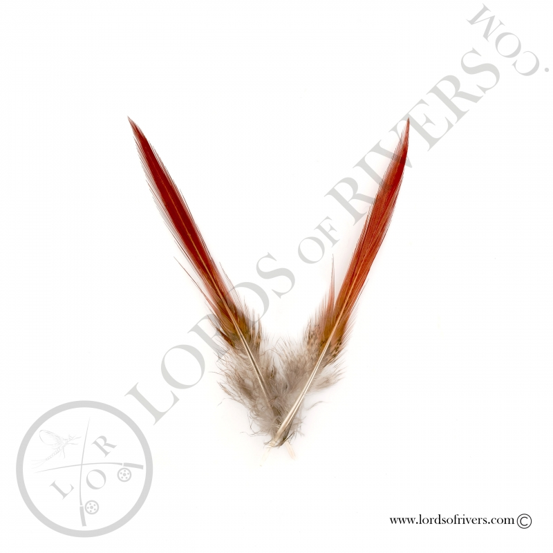 Golden Pheasant Sword Spikes Lords of Rivers