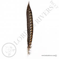 Faisan Lady Amherst naturel - Plume latérale de queue Lords of Rivers