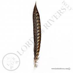 Lady Amherst Pheasant - Side tail Lords of Rivers