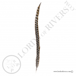 reeves-pheasant-center-tail-full-feather