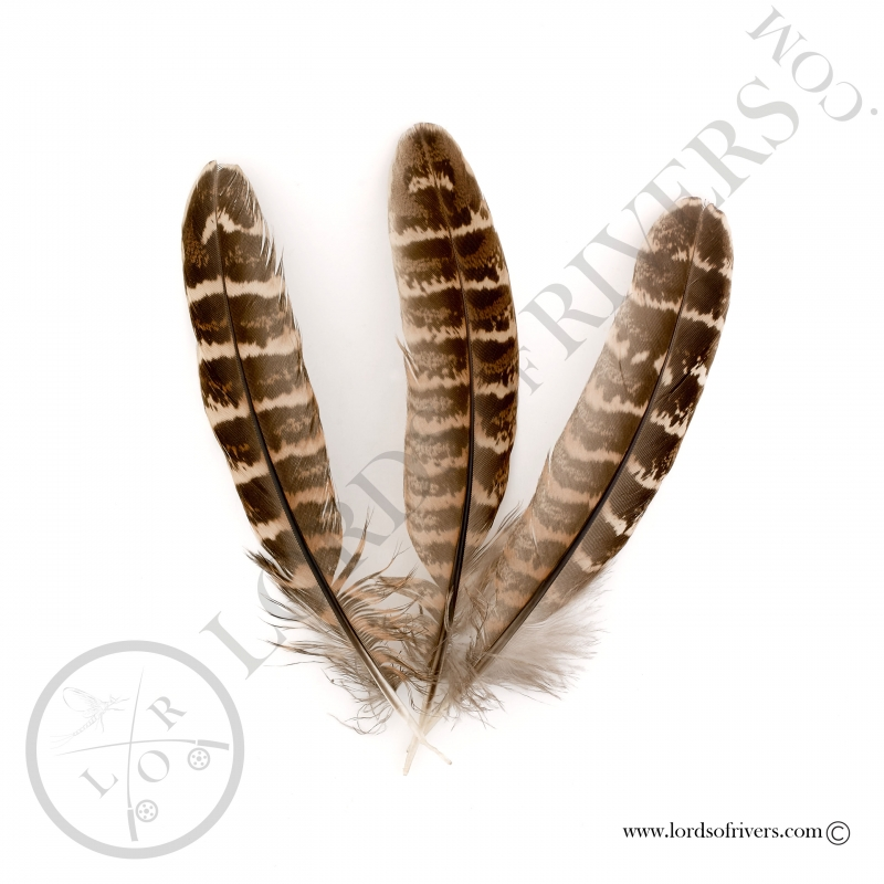 Hen Pheasant wing feathers Lords of Rivers