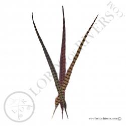 ringneck-natural-pheasant-center-tail-fu