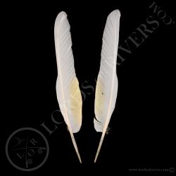 cacatoes-blanc-paire-de-plumes-d-ailes-t