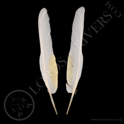 white-cockatoo-wing-cover-paired-type-1-