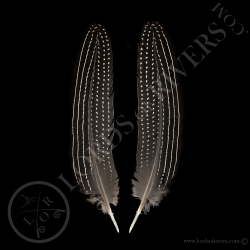vulturine-guineafowl-wing-cover-paired-l
