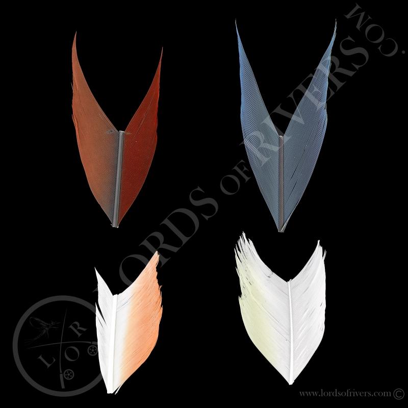 TryMe Perroquets, 4 sections de 5 cm de Ara & Cacatoés