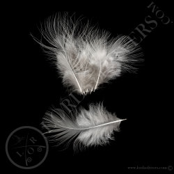 plumes-de-corps-hokki-blanc-lords-of-riv