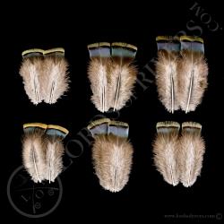 dindon-ocelle-quot-green-shoulder-feathe