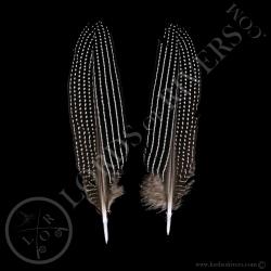 pintade-vulturine-paire-de-plumes-d-aile