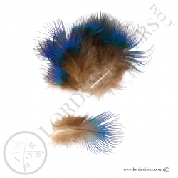 peacock-breast-blue-feathers-lords-of-ri