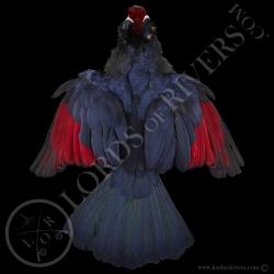 touraco-violet-full-skin-peau-complete-l