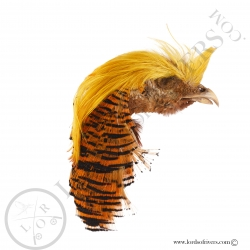 golden-pheasant-complete-head-crest-tipp