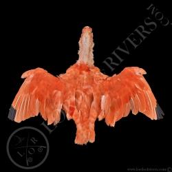 ibis-rouge-full-skin-peau-complete-lords