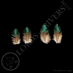 resplendent-quetzal-2-paired-feathers-ty