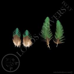 quetzal-resplendissant-set-de-2-paires-d