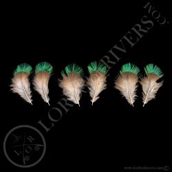 quetzal-resplendissant-set-de-3-paires-d