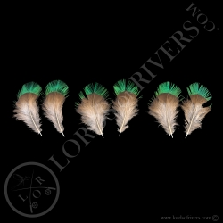 resplendent-quetzal-3-paired-feathers-ty